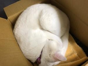 なぜかフィットするサイズの小さい箱がお気に入りです