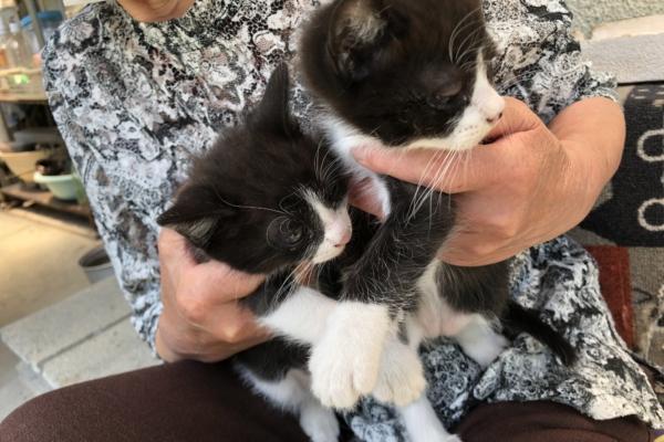 黒白 子猫